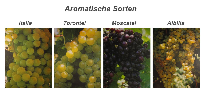 Trauben Aromatisch