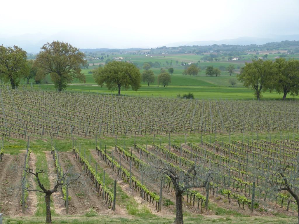Blick vom Weingut Perticaia